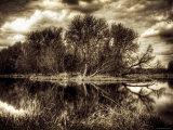 Frühling Fotografie-Druck von Stephen Arens