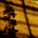Orquídea (pequeña) Lámina fotográfica por Lydia Marano