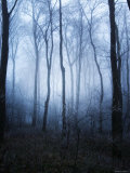 Forest and Brush in Dense Fog Photographic Print by Tommy Martin