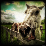Horse Baring Teeth Photographic Print by Stephen Arens