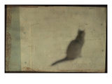 Blurred Cat Sitting Photographic Print by Mia Friedrich