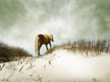 Chocolate Horse Walking through Sand Photographic Print by Jan Lakey