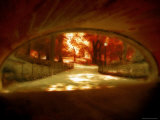 Central Park, no. 1 Photographic Print by Katherine Sanderson