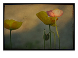 Study of Poppies Photographic Print by Mia Friedrich