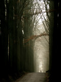 Foggy Path with Trees Photographic Print by Guillaume Carels