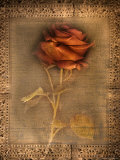 Rose on Fabric Photographic Print by Robert Cattan