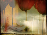 Barren Field and Red Tulips Photographic Print by Mia Friedrich