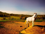 White Horse Fenced into Countryside Pen Photographic Print by Jan Lakey
