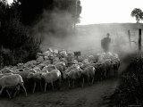 The Shepherd Reproduction photographique par Monika Brand
