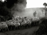The Shepherd Fotografie-Druck von Monika Brand