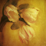 Three Tulips Photographic Print by Irene Suchocki