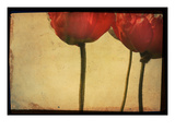 Study of Red Poppies Photographic Print by Mia Friedrich