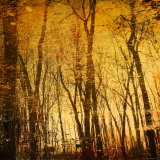 Tree Reflections Photographic Print by Irene Suchocki