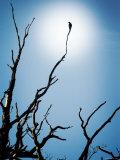 Bird Perched on Branches Reaching to the Sky Photographic Print by Tommy Martin