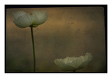 Study of Two White Flowers Photographic Print by Mia Friedrich