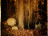 Ghostly Forest Landscape Photographic Print by Robert Cattan