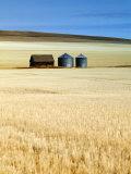 Grain Barn, Rosebud, Alberta, Canada Photographic Print by Walter Bibikow