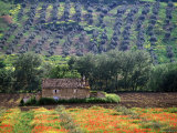Landscape of Andalucia, Spain Photographic Print by Peter Adams