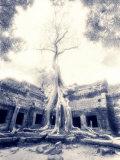 Ta Prohm, Angkor, Cambodia Photographic Print by Walter Bibikow