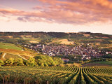 Irancy, Chablis, Burgundy, France Photographic Print by Doug Pearson