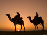 Camels Near the Pyramids at Giza, Cairo, Egypt Fotografisk tryk af Doug Pearson