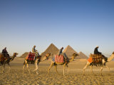 Camels at the Pyramids, Giza, Cairo, Egypt Photographic Print by Doug Pearson