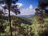 Troodos Mountains, Cyprus Photographic Print by Rex Butcher