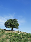 Olive Tree, Crete, Greece Photographic Print by Doug Pearson