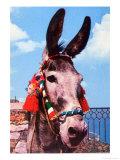 Kitsch Donkey Stampa
