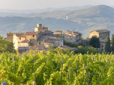 Vineyard and Village, Volpaia, Tuscany, Italy Photographic Print by Peter Adams
