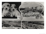 1962 Southport Postcard with Puppies Posters