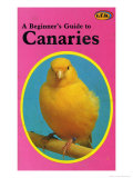Beginner's Guide to Canaries Posters