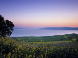 Sea of Galilee, Israel Fotodruck von Jon Arnold