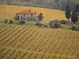Vineyard, Greve in Chianti, Tuscany, Italy Fotografisk tryk af Walter Bibikow