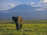 Elephant, Mt. Kilimanjaro, Masai Mara National Park, Kenya Fotografie-Druck von Peter Adams