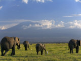 Elephant, Mt. Kilimanjaro, Masai Mara National Park, Kenya Photographie par Peter Adams