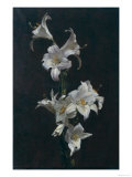 White Lilies, c.1883 Gicl&#233;e-Druck von Henri Fantin-Latour