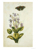Botanical Study of a Violet Lmina gicle por Jacques Le Moyne De Morgues
