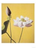 Lotus, 19th Century Giclee Print by Ogawa Kazuma