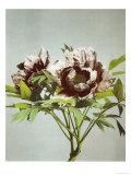 Tree Peony, 19th Century Giclee Print by Ogawa Kazuma