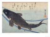 Print of Carp in a Stream Gicl&#233;e-Druck von Hiroshige Utagawa