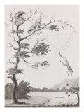 Print Engraving of the Mecco and Kishee Kishee Monkeys Giclée-Premiumdruck von William Blake