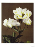 Herbaceous Peony, 19th Century Giclee Print by Ogawa Kazuma