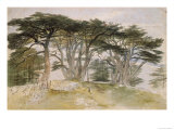 Cedars of Lebanon Gicl&#233;e-Druck von Edward Lear