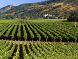 Wine Country, Napa Valley, California Photographic Print by John Alves