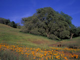Walnut Creek, Mt. Diablo State Park, California Photographic Print by Inger Hogstrom
