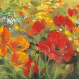 Oriental Poppy Field I Poster af Carol Rowan
