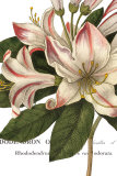 Botanique III Prints