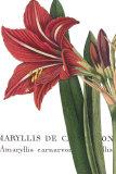 Botanique I Prints