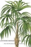 Riviera Palms II Prints
